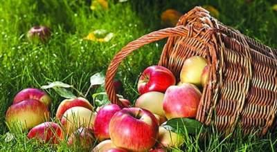 Назван полезный фрукт, который необходимо есть каждый день
