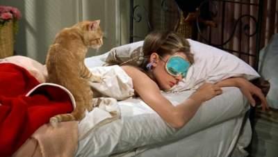 Медики рассказали, почему опасно спать рядом с домашними питомцами