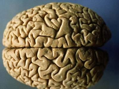 Названы главные вещества для оздоровления мозга