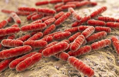 Пробиотики могут быть опасны для мозга