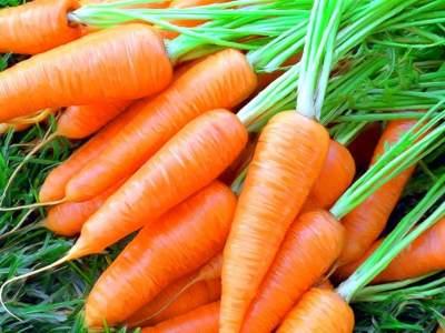 Названы полезные свойства моркови, о которых мало кто знает