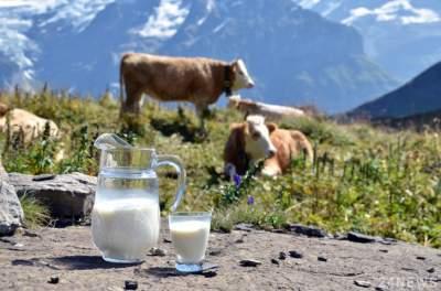 Диетологи рассказали, чем полезно молоко с утра