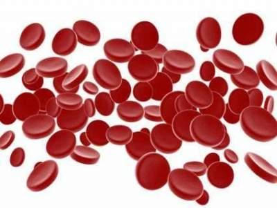 Врачи назвали продукты для поддержания уровня гемоглобина