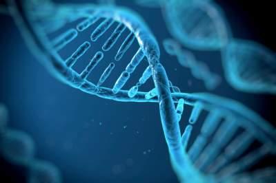 Ученые назвали количество бесполезных генов в организме