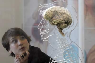 Названы препятствующие старению мозга продукты