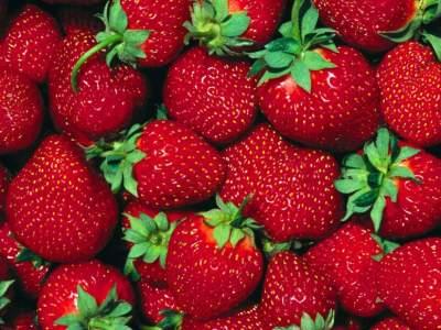 Названа эффективная ягода для профилактики рака груди