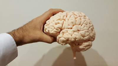 Названа диета, существенно замедляющая старение мозга