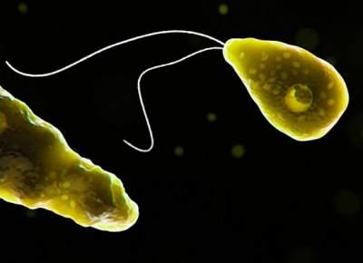 Найден способ борьбы с пожирающей мозг амебой