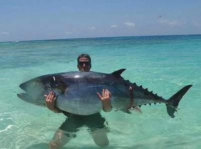 Медики рассказали о пользе употребления тунца