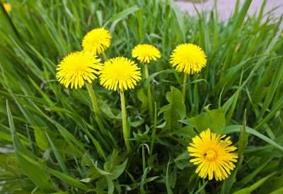 Назван цветок, помогающий бороться с онкологией