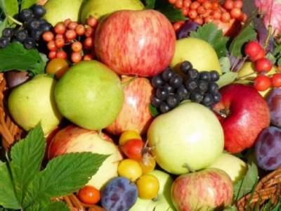 Названы фрукты, которые полезно есть с косточками