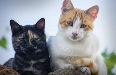 Ученые нашли спасение от аллергии на кошек