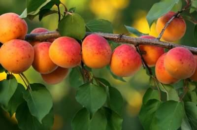 Диетологи поделились необычной фруктовой монодиетой