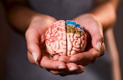 Ученые создадут мозг, обладающий сознанием
