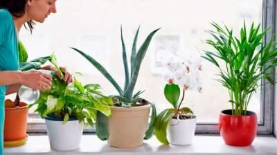 Эти лекарственные растения способны снять усталость