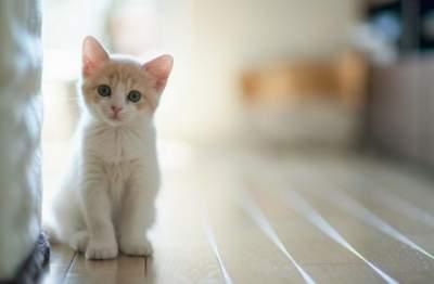 Паразиты домашних кошек могут вызывать шизофрению, — ученые