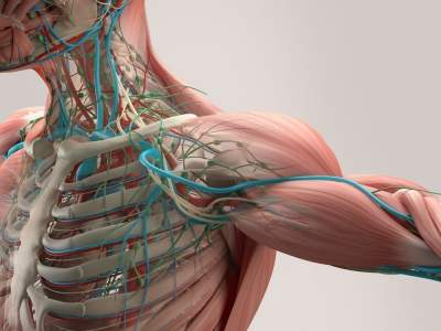 Названы основные признаки проблем с артериями