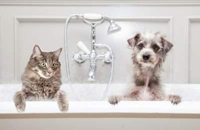 Названы опасные болезни, которыми могут заразить животные