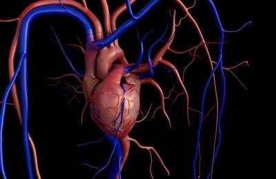 Названа причина развития рака сердца