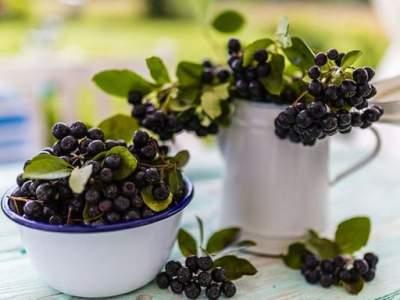 Эта ягода предотвращает развитие опухолей