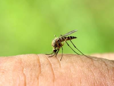 Как спастись от укусов комаров: народные средства
