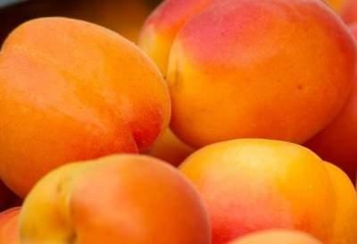 Названы основные полезные свойства абрикоса