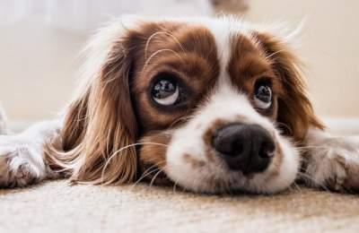 Опасная собачья болезнь угрожает здоровью людей