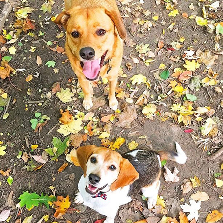 Королевский лабрадор: принц Гарри и Меган Маркл завели собаку