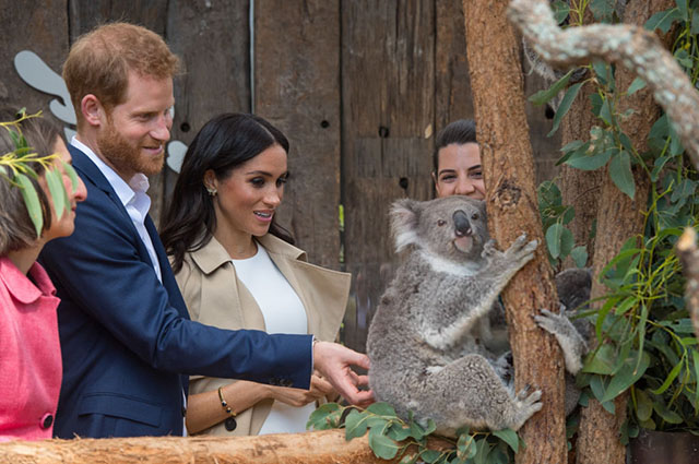 Принц Гарри и Меган Маркл познакомились со своими тезками коалами в зоопарке Сиднея