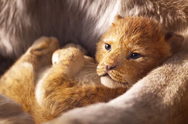 Вышел первый трейлер ремейка диснеевского мультфильма «Король Лев»