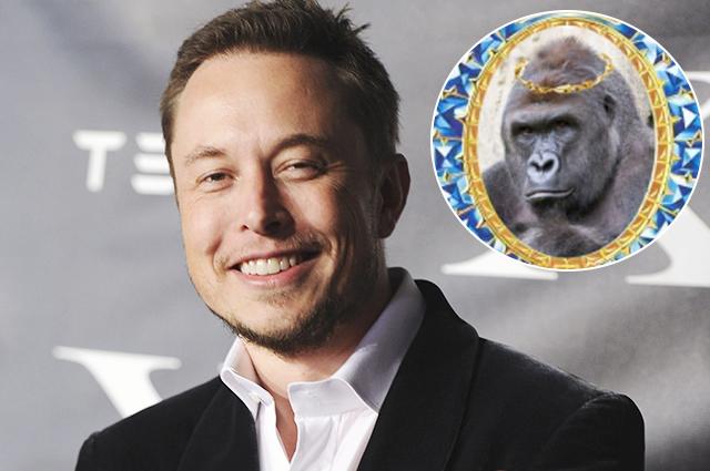 Илон Маск зачитал рэп про гориллу