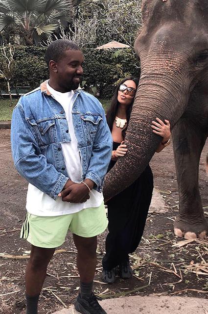 Веганы раскритиковали Ким Кардашьян за фото со слоном: «Он кажется таким несчастным!»