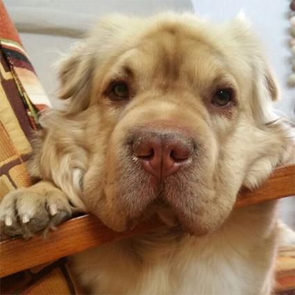 Танцор, хореограф и любитель собак: что мы знаем о возлюбленном балерины Натальи Осиповой