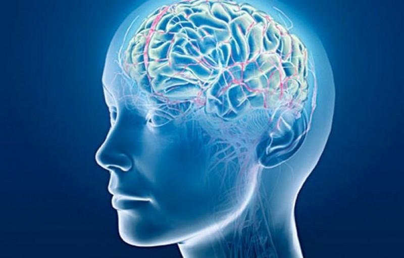Ученые определили, что влияет на долголетие мозга