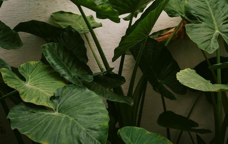 Названы домашние растения, способные навредить человеку